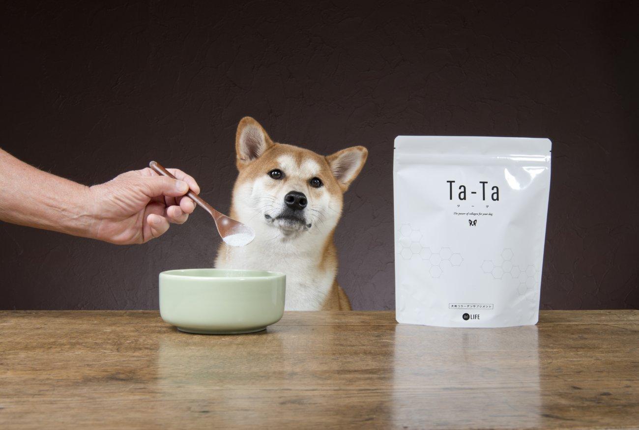 柴犬,コラーゲンサプリ,Ta-Ta,タータ
