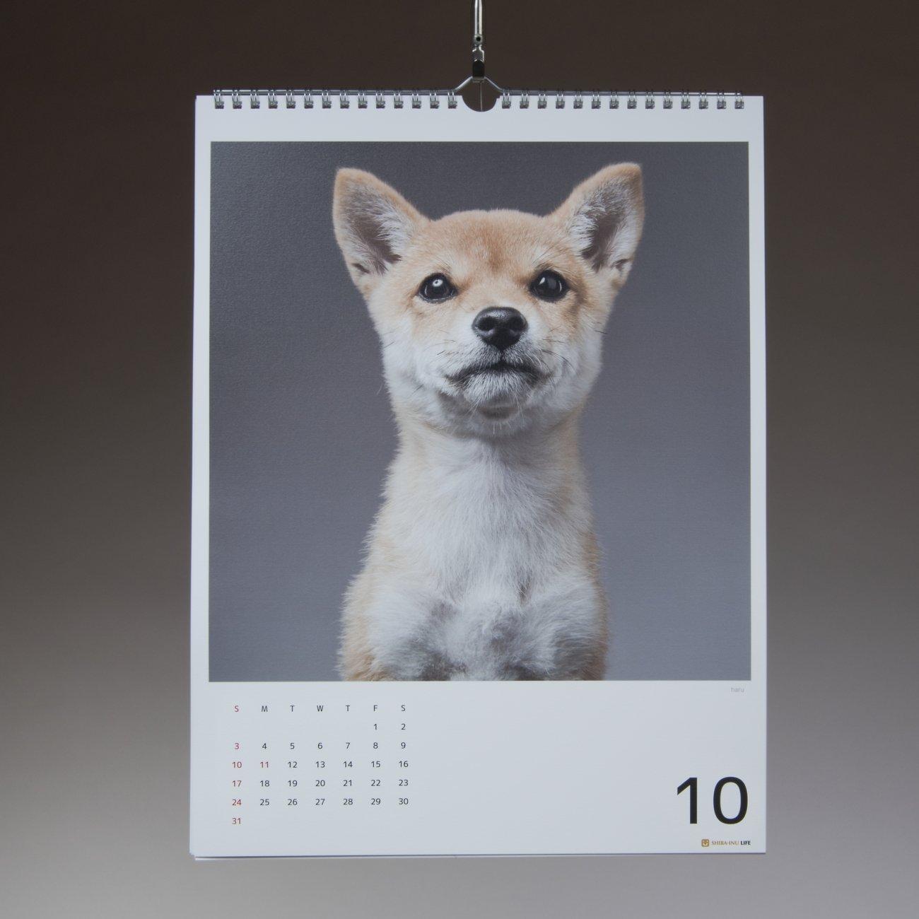 柴犬,カレンダー,内山慎吾