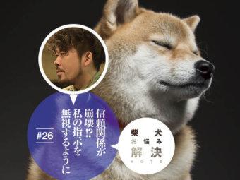 柴犬,お悩み解決ノート
