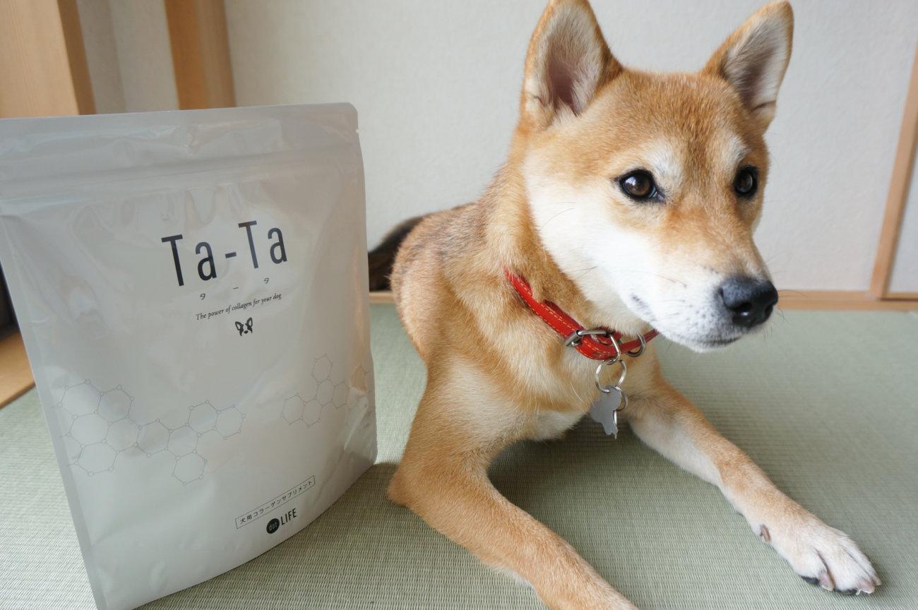 柴犬ライフ,コラーゲン,Ta-Ta,タータ