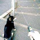 柴犬,Instagram,twitter,頑固