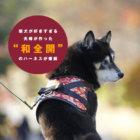 """【柴×和=正義だ!】柴犬が好きすぎる夫婦が作った""""和全開""""のハーネスが爆誕"""