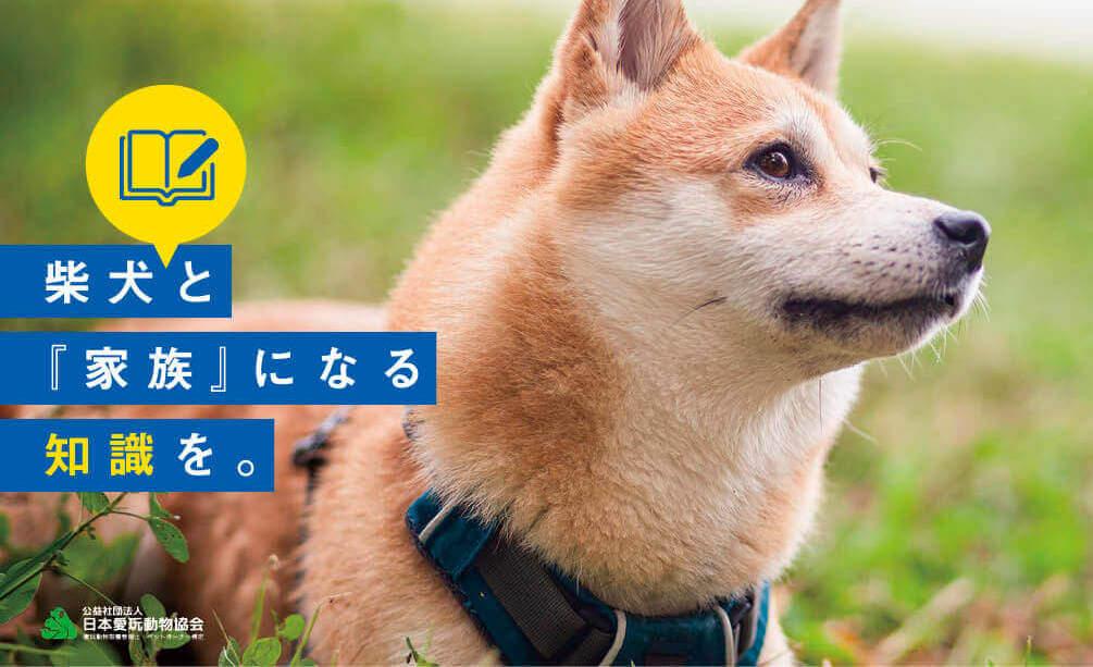 柴犬,愛玩動物飼養管理士
