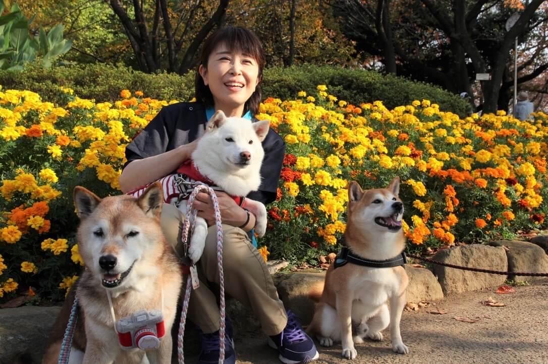 「Hello doggie ひだまりシニア部」の老犬介護士、平端弘美さん。