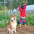 """お小言を言いつつ優しい柴犬監督と、真面目で素直な新人作業員さんの""""ほのぼの農業日記""""。どの日もホッコリが溢れすぎてた。"""
