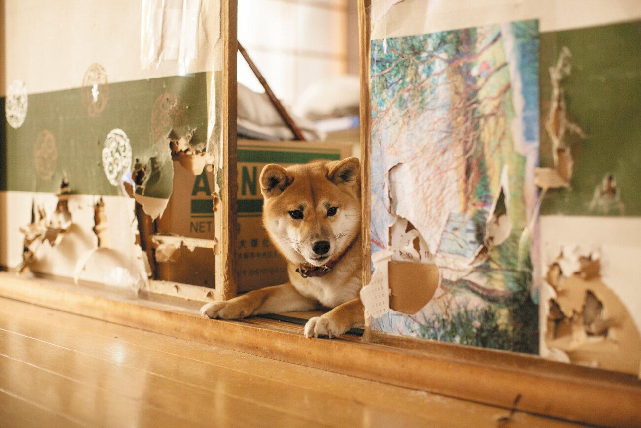 雑誌版柴犬ライフ