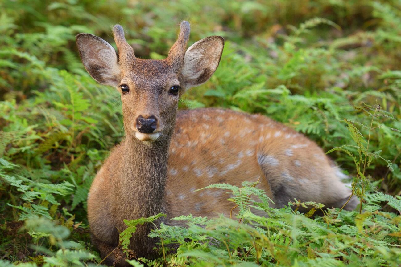 柴犬,鹿肉,フード,おゝみや
