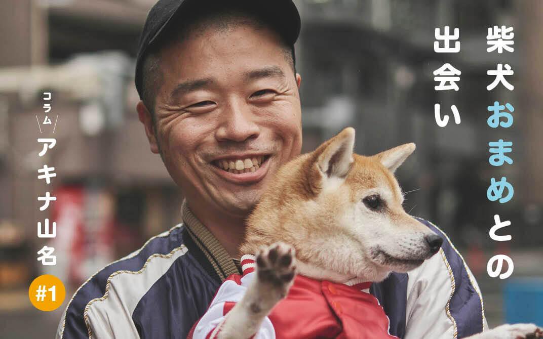 アキナ山名,柴犬,おまめ