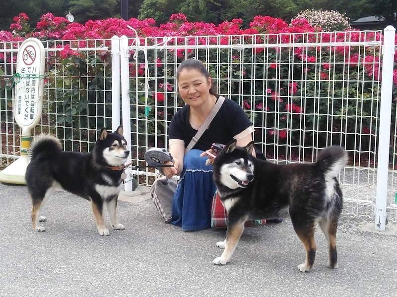 柴犬とオーナー