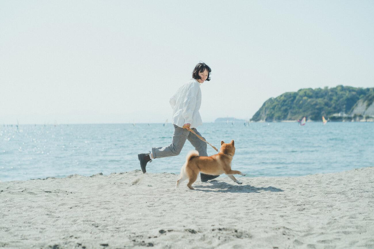 柴犬,モデル,kiki,鎌倉