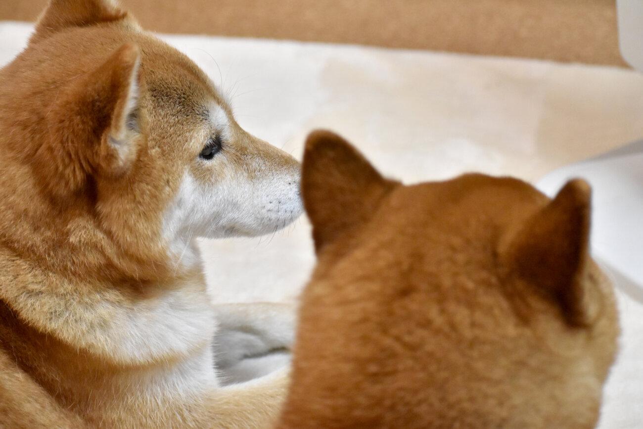 柴犬,パナソニック,ジアイーノ