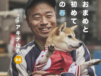 柴犬,アキナ山名,おまめ