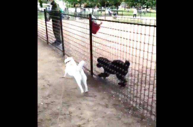 柴犬,Twitter