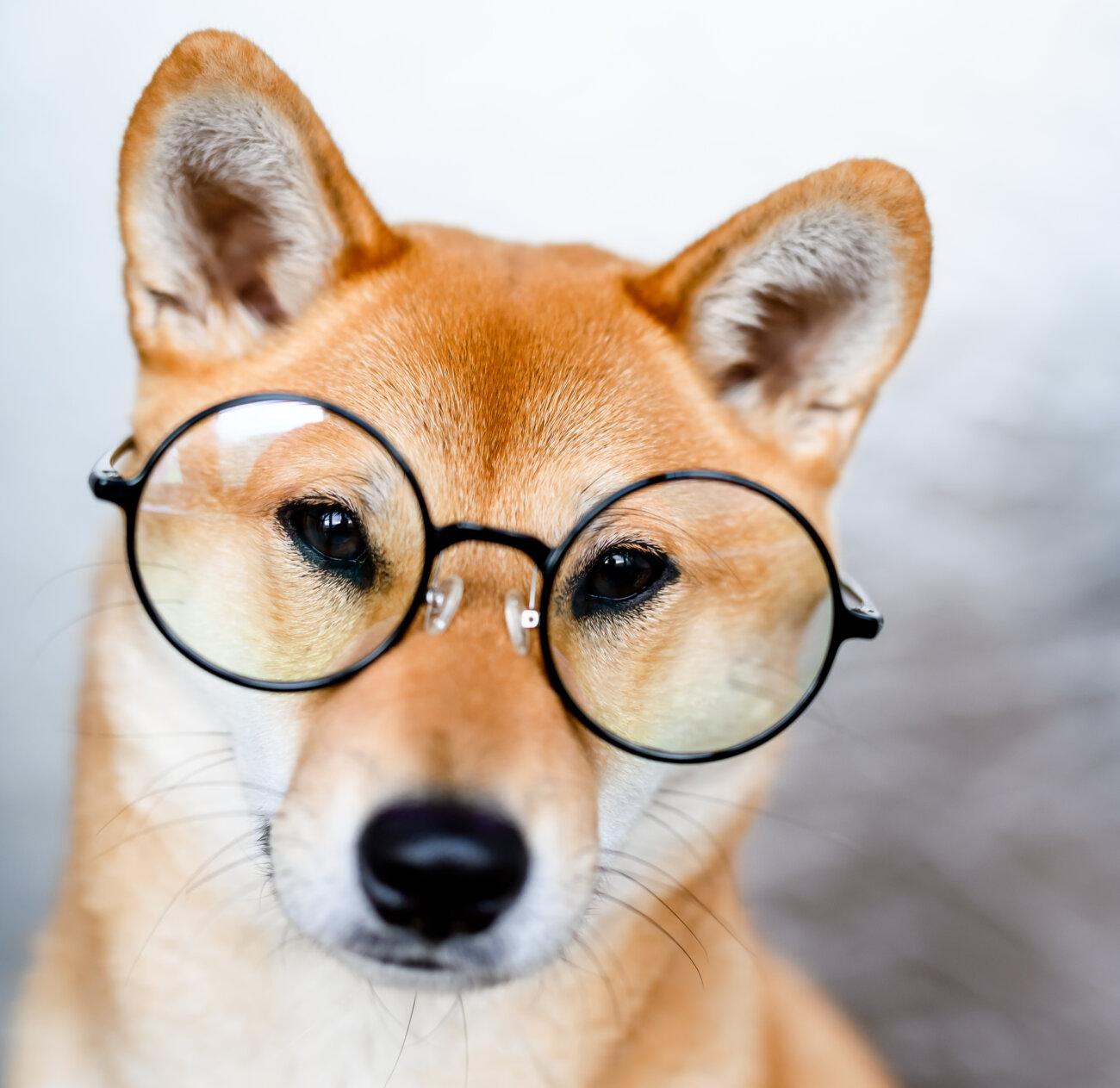 柴犬,ドッグフード工房