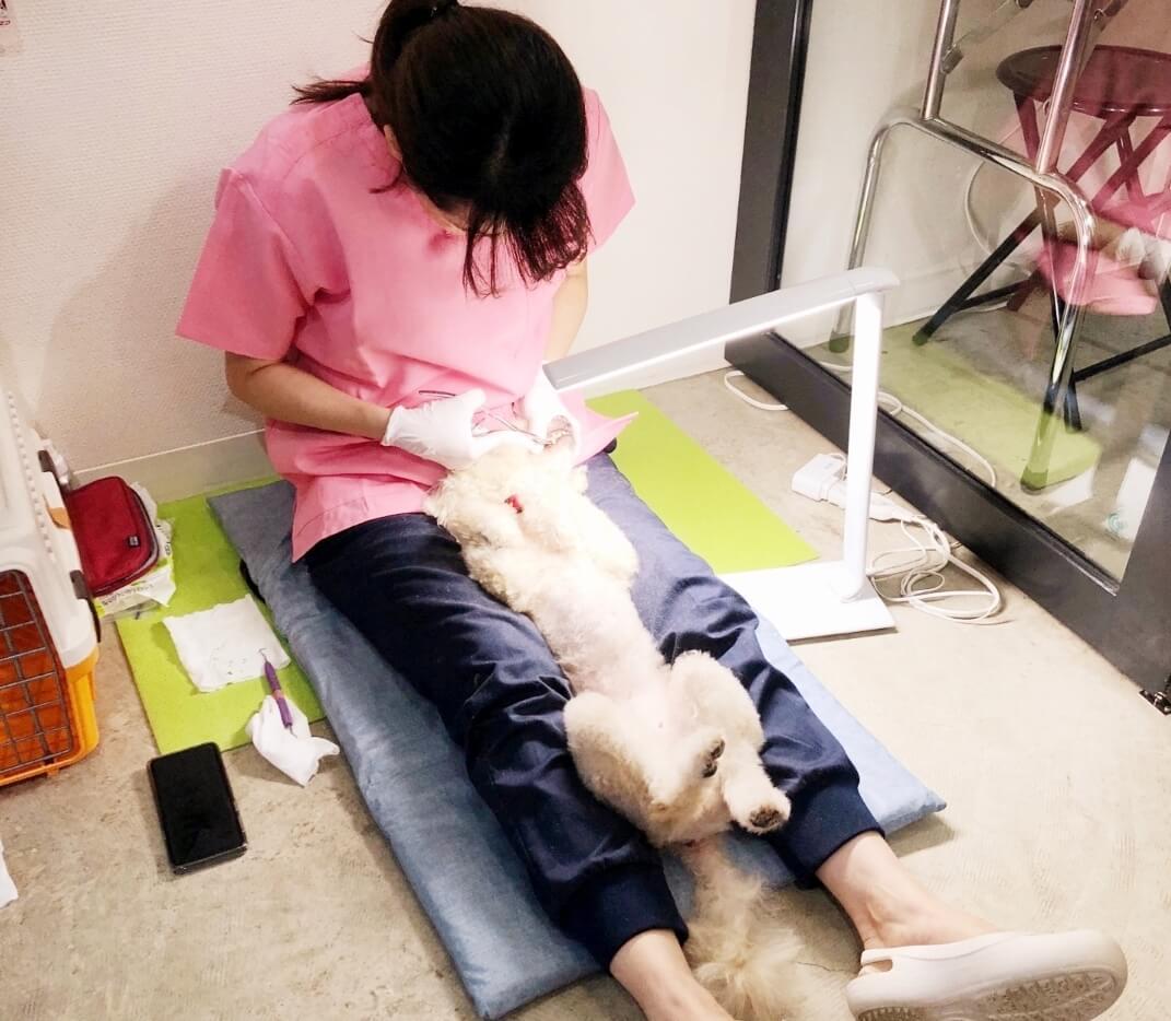 犬の歯磨き施術