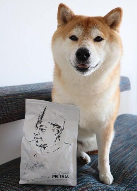 柴犬,PELTHIA(ペルシア),フード