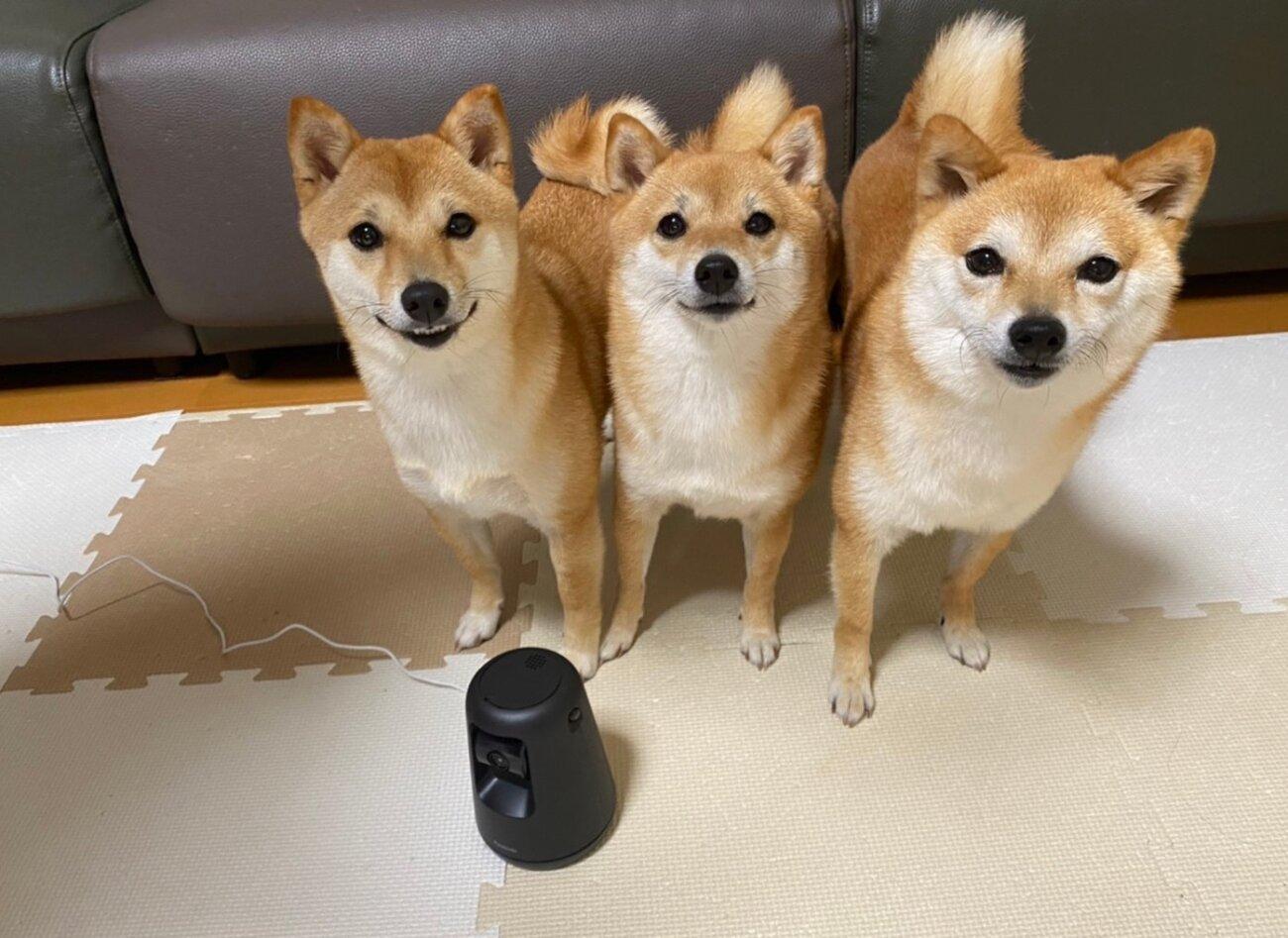 柴犬.パナソニック,HDペットカメラ