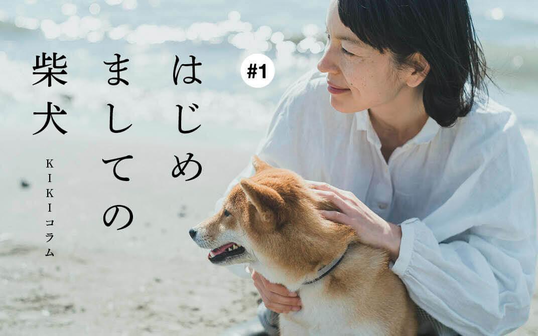 柴犬,KIKI,椿,柊