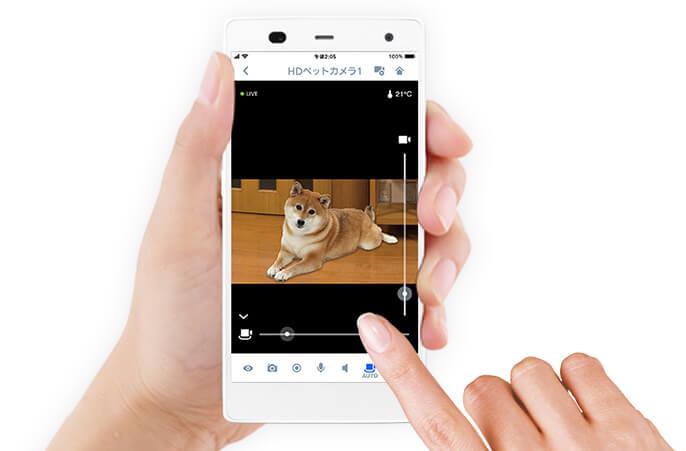 柴犬,パナソニック,hdペットカメラ