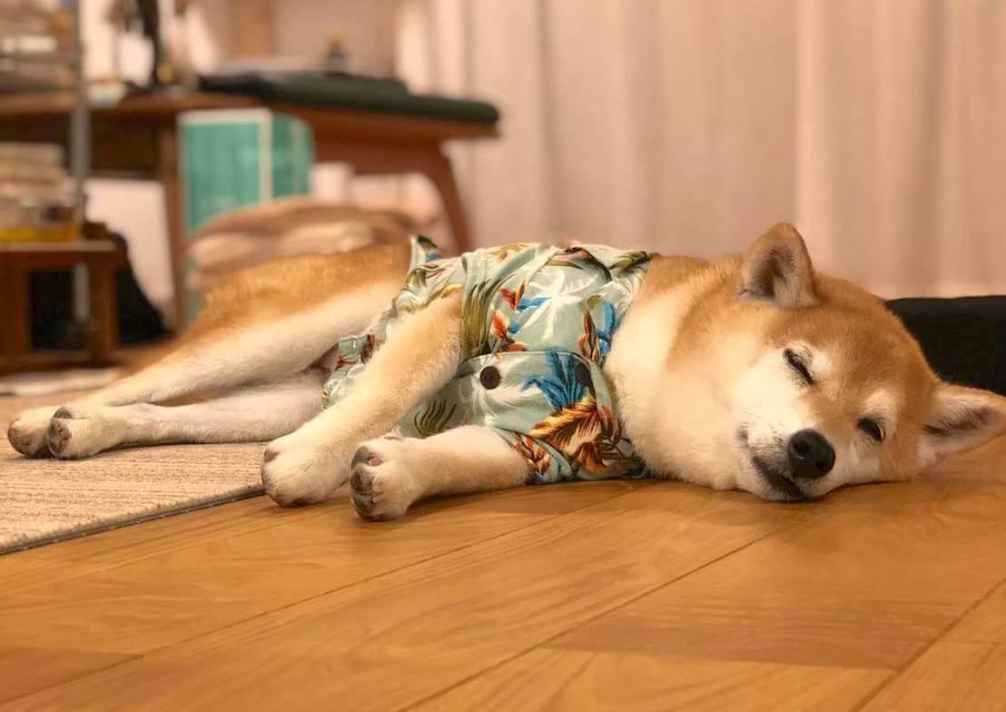 柴犬ライフ,アキナ山名,おまめ