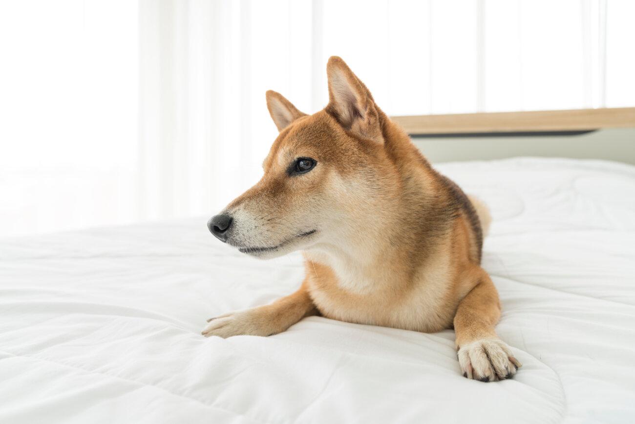 柴犬,サプリメント,スキンケア