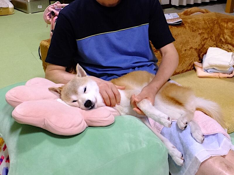 柴犬と家族