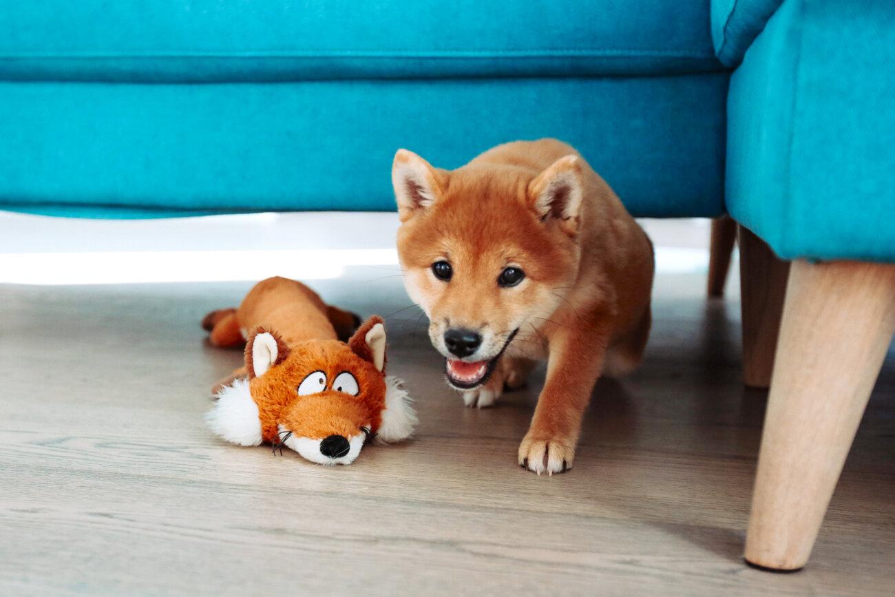 柴犬,サンスター,QAIS -air- 03