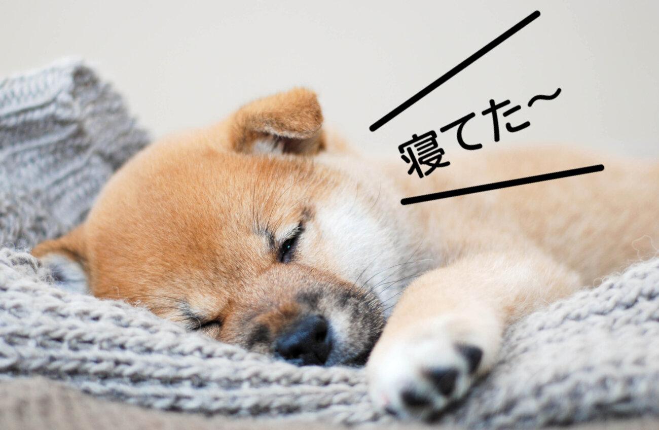 柴犬ライフ.waneco,ワネコ,LINE